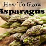 How-To-Grow-Asparagus-8