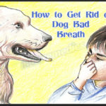 How-to-Get-Rid-of-Dog-Bad-Breath