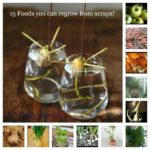 post-3695-15-foods-you-can-regrow-from-s-y1tv