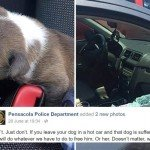 puppy-rescue-from-car-split-tease-today-166030_f044b904030f7f6d3565dd709ed85d0e.today-inline-large-11