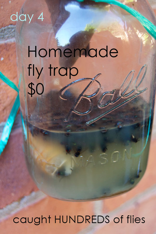 how to catch house flies with vinegar