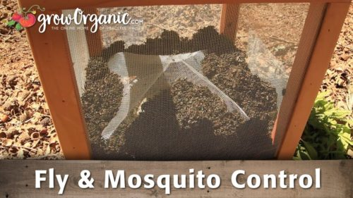 How to Get Rid of Flies and Mosquitoes — Info You Should Know